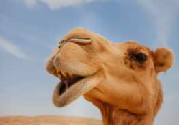 CAMELS 2021 – Understanding the Regulatory Rating System for Financial Institutions