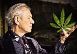 Cannabis-Related Businesses – To Bank or Not To Bank